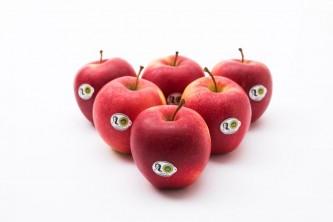jablkagrojeckie3