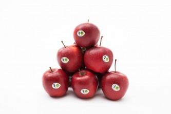 jablkagrojeckie4